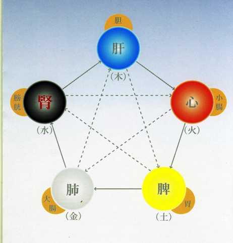 臓象学説における整体観(整体観念)_a0085271_748533.jpg