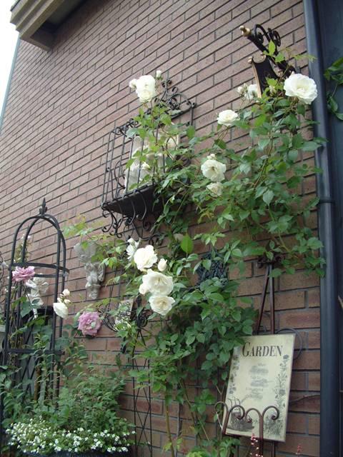 バラも咲き始めました♪   _f0029571_0474431.jpg