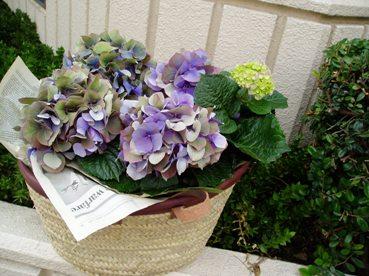 秋色紫陽花の贈り物_d0104091_23455276.jpg