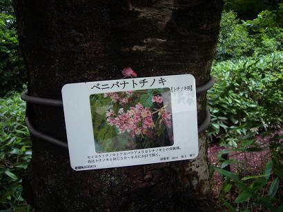 神代植物園 木の花_e0108897_23224475.jpg