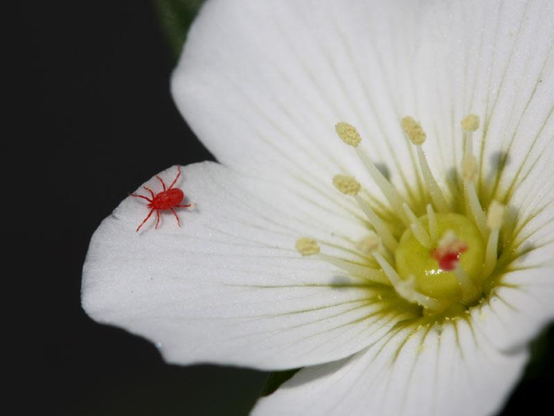 庭の縁石に0.5ミリぐらいの赤い虫が多数います_b0025008_21314579.jpg