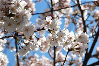 過ぎ行く春と、薄れ行く記憶と、磨り減る体力と・・・。_c0116714_13533016.jpg