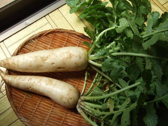野菜畑春爛漫 さあ収穫の始まりだ!_b0137932_20581635.jpg