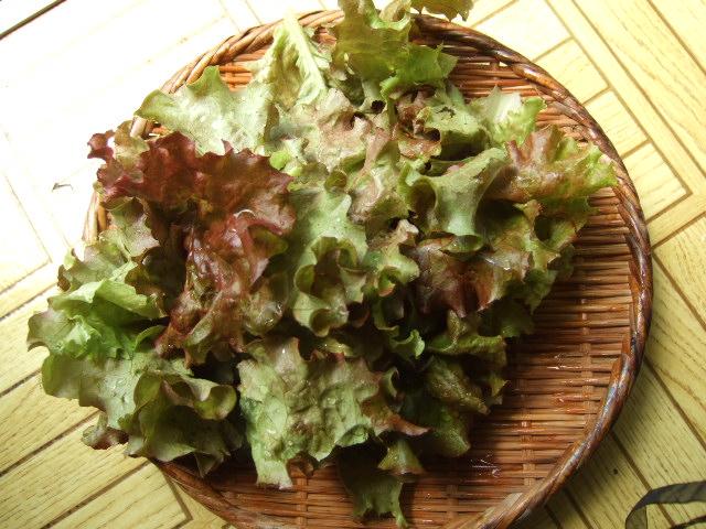野菜畑春爛漫 さあ収穫の始まりだ!_b0137932_20583961.jpg