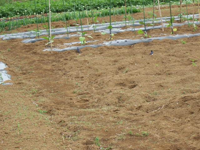 野菜畑春爛漫 さあ収穫の始まりだ!_b0137932_2111280.jpg