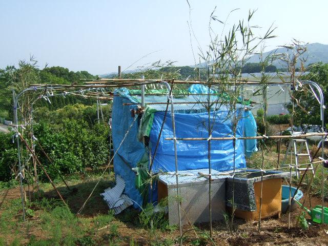 野菜畑春爛漫 さあ収穫の始まりだ!_b0137932_2131623.jpg