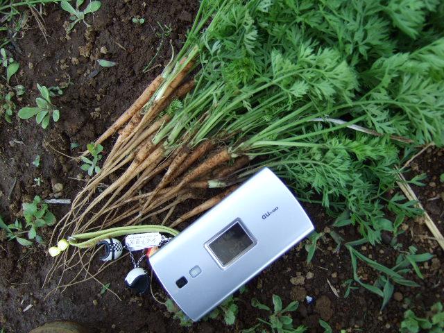 野菜畑春爛漫 さあ収穫の始まりだ!_b0137932_21322151.jpg