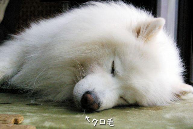 遊び疲れて_c0062832_17291359.jpg