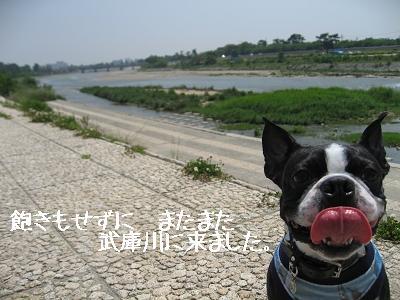 河川敷、それぞれの風景_e0126046_2352184.jpg