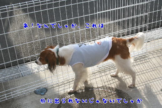 d0013149_1032512.jpg