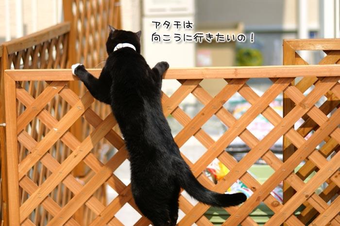 f0142061_7322850.jpg
