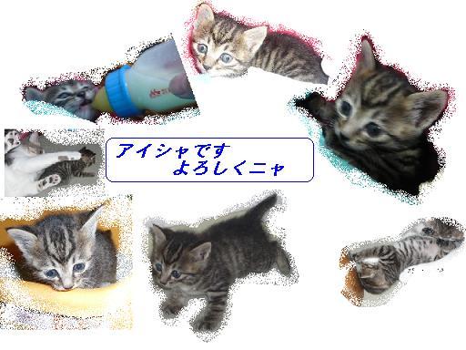 b0112380_11204376.jpg