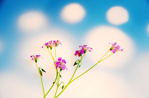 チチャな花。_b0133890_13485131.jpg
