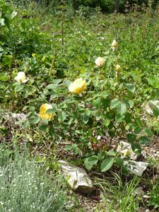 母にささげる花コレクション_f0106597_324054.jpg