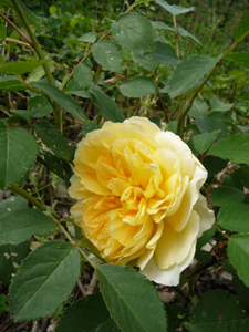 母にささげる花コレクション_f0106597_3449100.jpg
