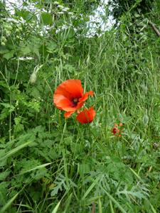 母にささげる花コレクション_f0106597_393948.jpg