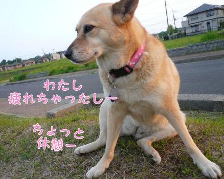 f0112407_1572352.jpg