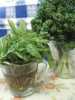 +野菜ソムリエは山菜が・・・+_e0140921_10501031.jpg