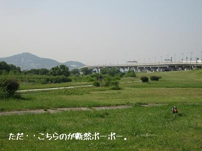 河川敷、それぞれの風景_e0126046_074764.jpg
