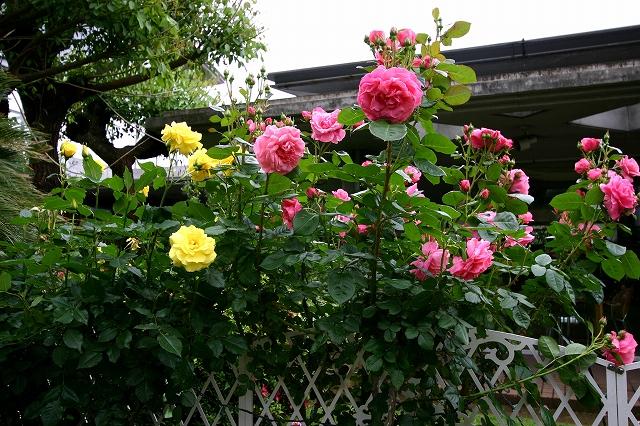 花の美術館へ~その3_d0152261_9231855.jpg