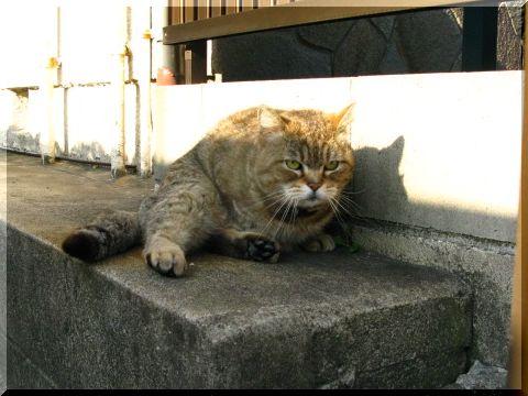 いぬぼんぬのお散歩ロード_d0112968_22544148.jpg