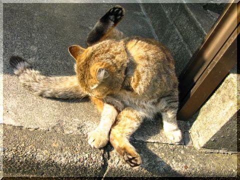 いぬぼんぬのお散歩ロード_d0112968_2254543.jpg