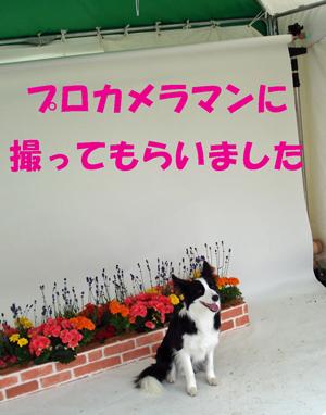 f0132070_242976.jpg