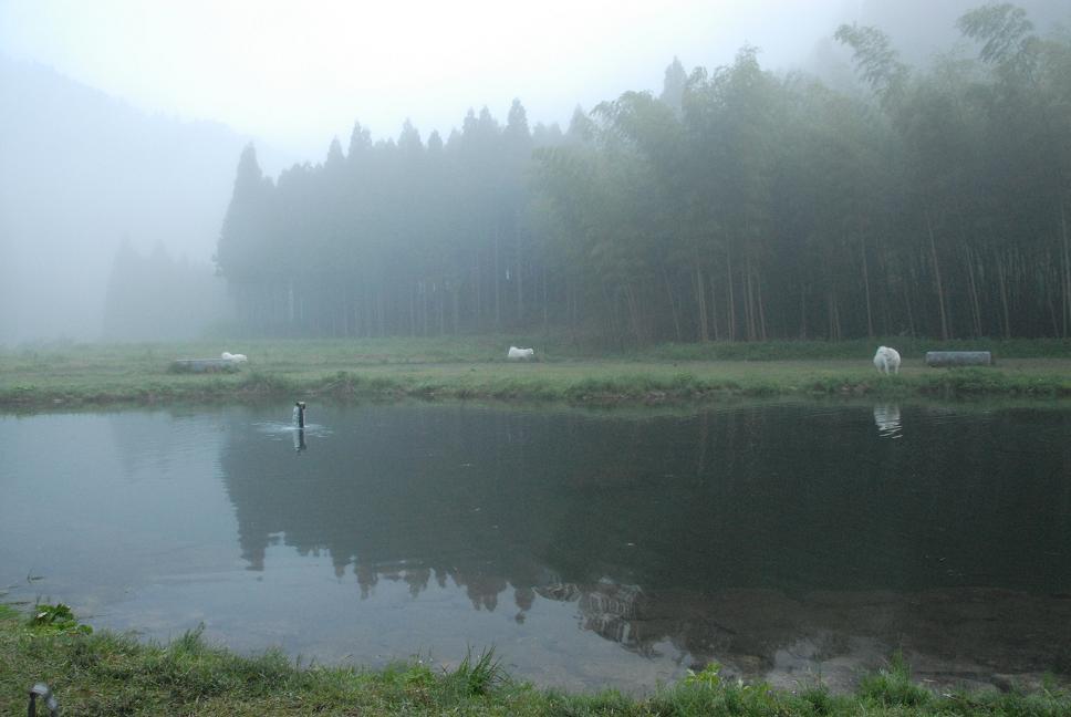 行ってきました!お気に入りのキャンプ場  オプショナルツアー編_a0049296_1954414.jpg