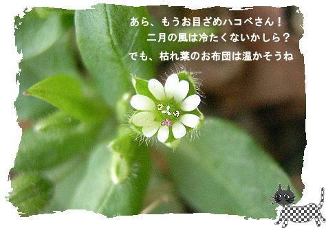f0137096_21211073.jpg