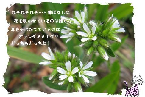 f0137096_21234199.jpg