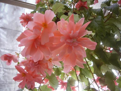 神代寺植物園 温室_e0108897_7523474.jpg