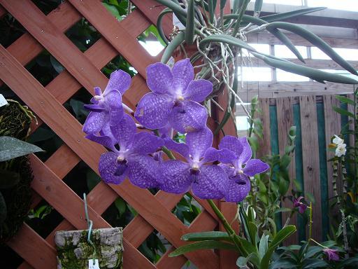 神代寺植物園 温室_e0108897_7525638.jpg