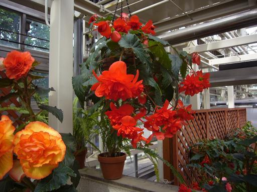 神代寺植物園 温室_e0108897_835224.jpg