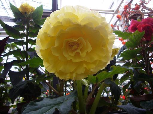 神代寺植物園 温室_e0108897_841252.jpg