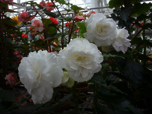 神代寺植物園 温室_e0108897_842350.jpg