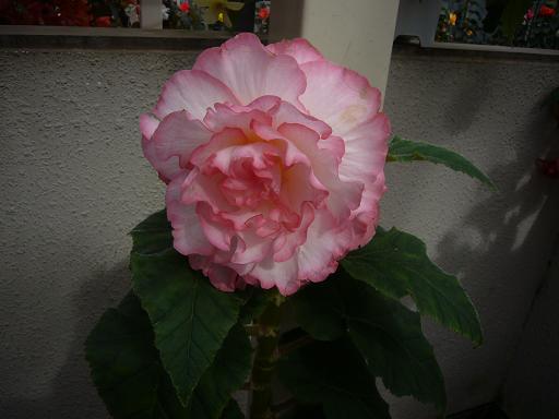 神代寺植物園 温室_e0108897_84297.jpg
