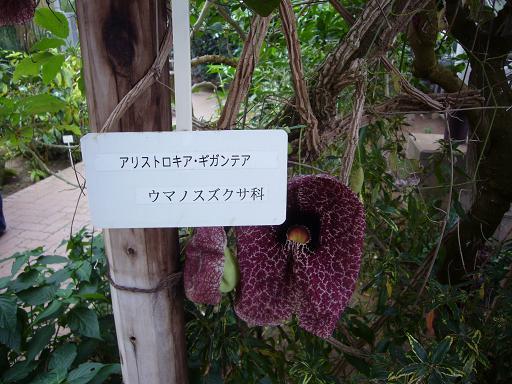 神代寺植物園 温室_e0108897_844733.jpg