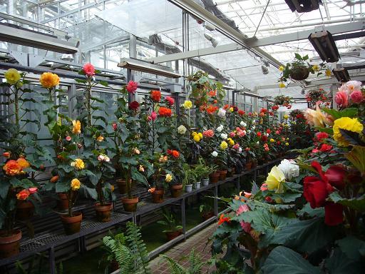 神代寺植物園 温室_e0108897_883528.jpg
