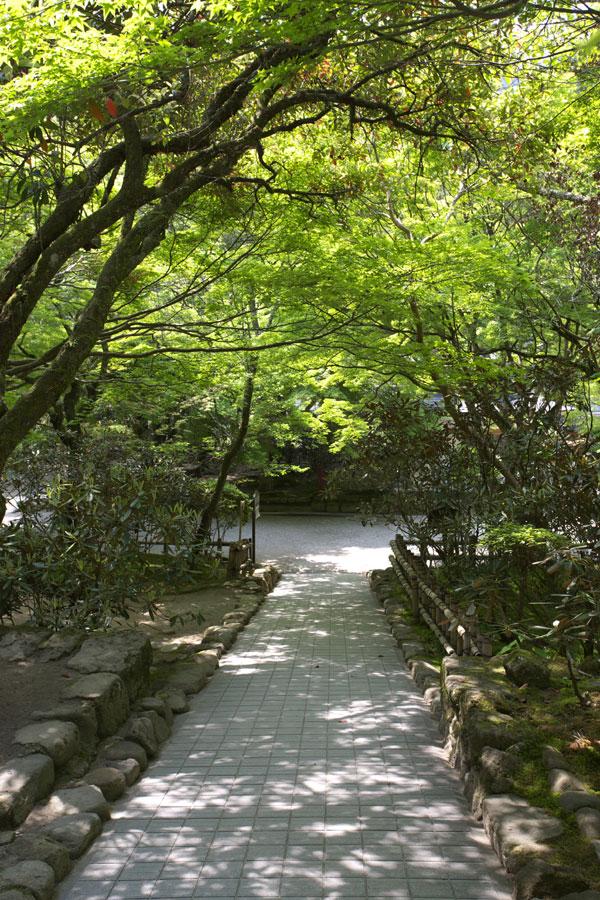 新緑の室生寺(1)_b0043304_134860.jpg