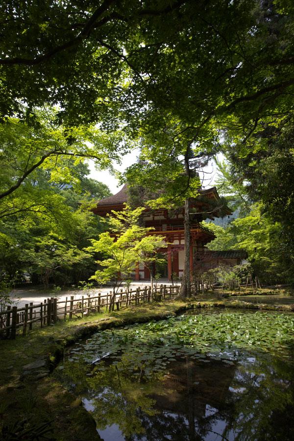 新緑の室生寺(2)_b0043304_157399.jpg