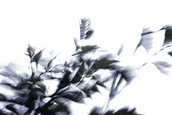 風 #2_f0155808_23183653.jpg