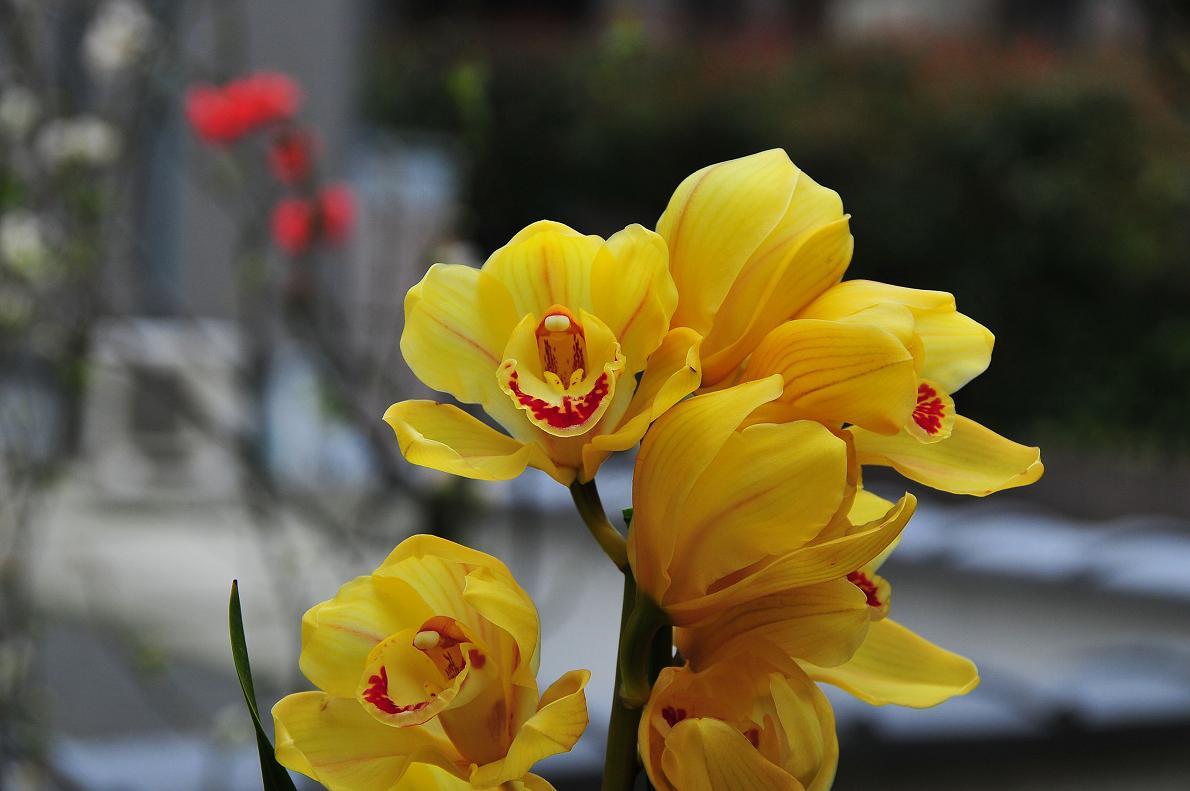 蘭(ランの花)の壁紙写真_f0172619_16315730.jpg