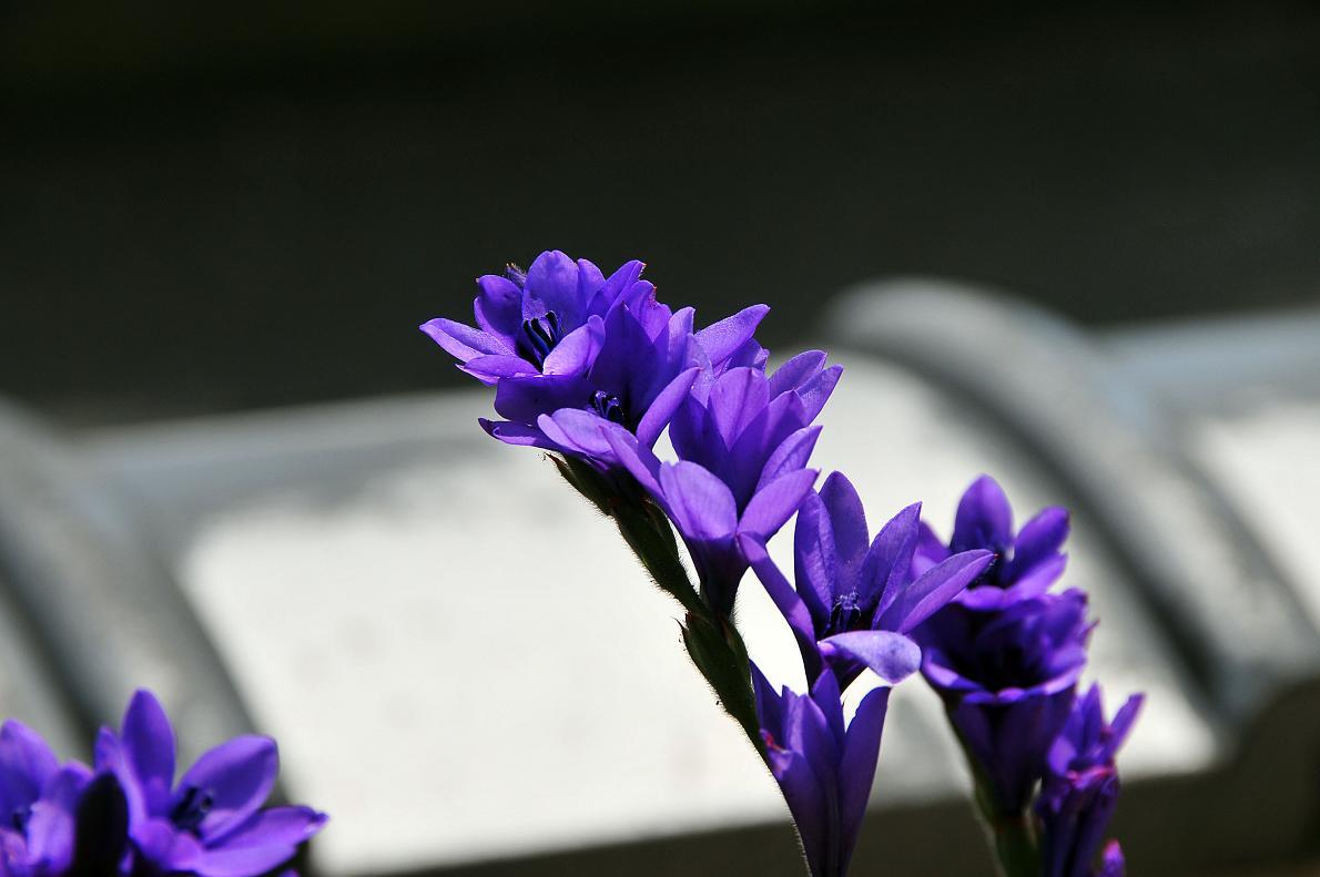 蘭(ランの花)の壁紙写真_f0172619_16334879.jpg
