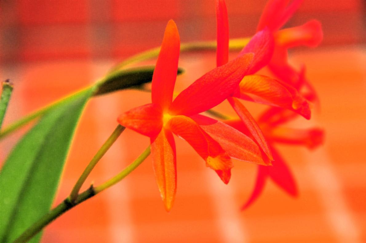 蘭(ランの花)の壁紙写真_f0172619_16342669.jpg