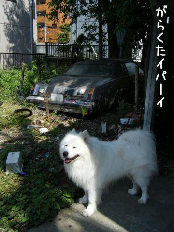 ピッカリお天気_c0062832_17104540.jpg