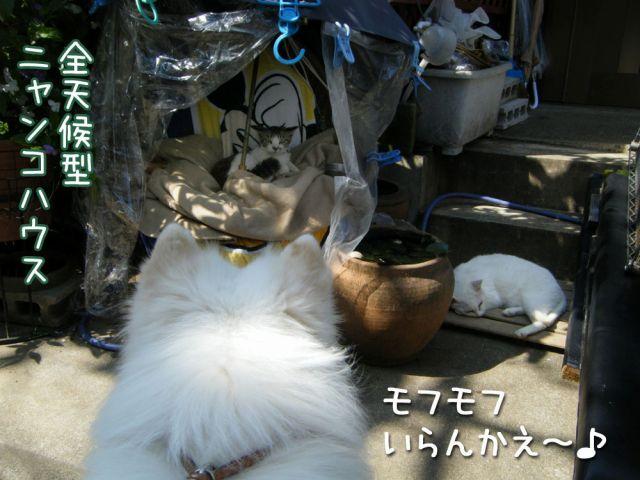 ピッカリお天気_c0062832_1711316.jpg