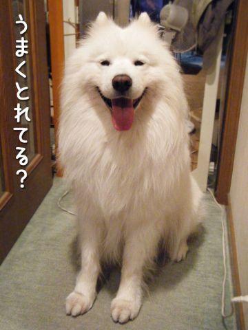 ピッカリお天気_c0062832_17113738.jpg