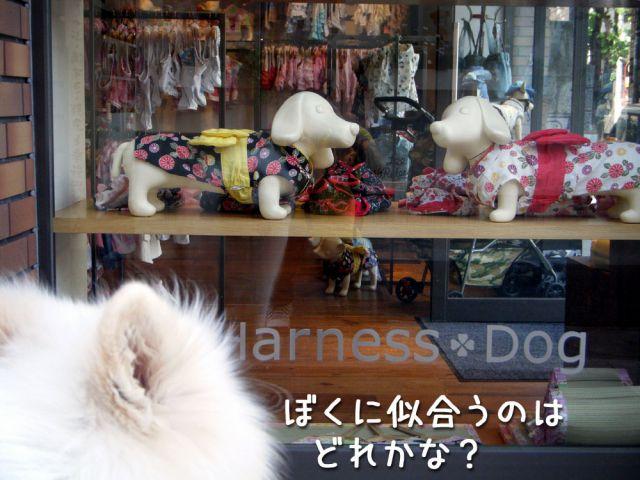 ピッカリお天気_c0062832_171172.jpg