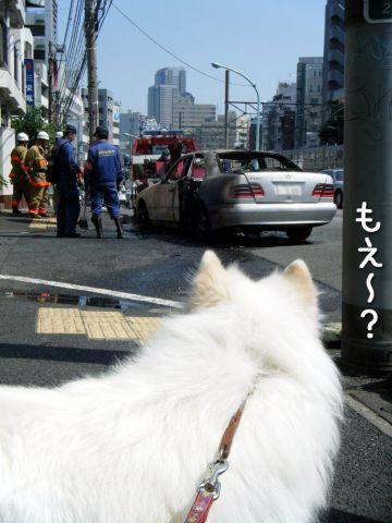 ピッカリお天気_c0062832_17264795.jpg