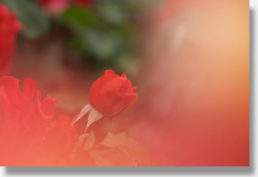 f0160440_9383587.jpg